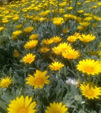 Blossom Now!